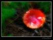 Dream Mushroom