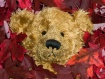Bearied in Leaves
