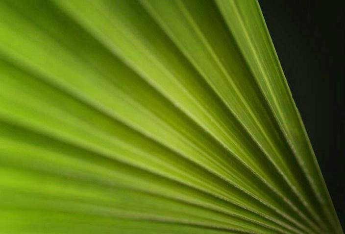 Green - ID: 2799200 © Sandra Hardt