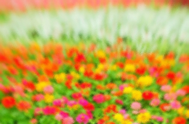 Flower bed abstract