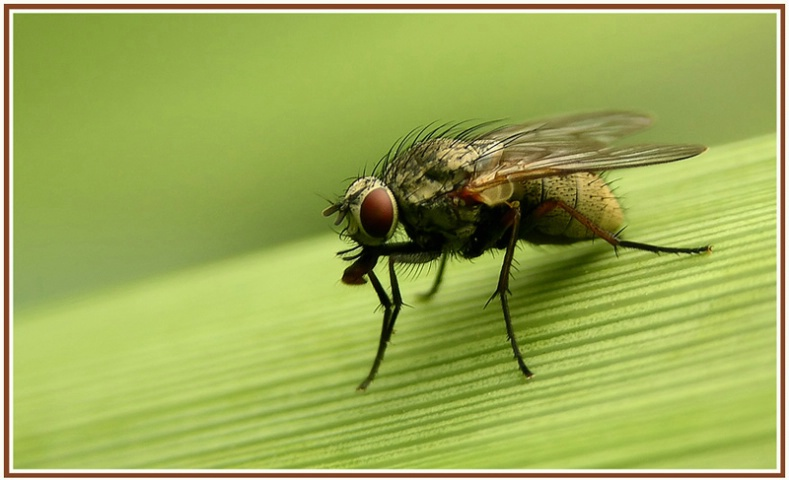 a small fly