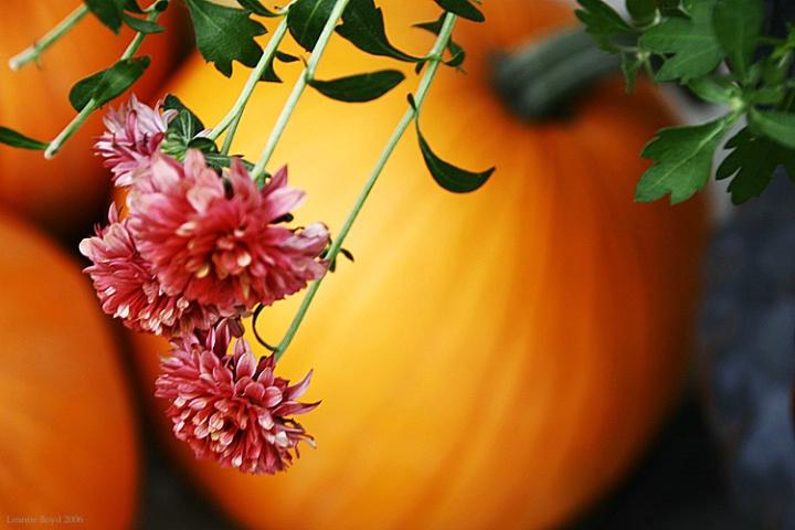 Happy Halloween!!!!!!!!!!!!!!!!!!!!!!