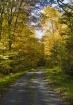 A Golden Road