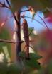 Autumn Preditor 2