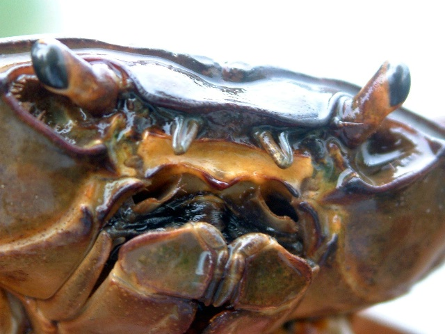 Face of a Crab