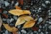 """Rocks, Rain,..."