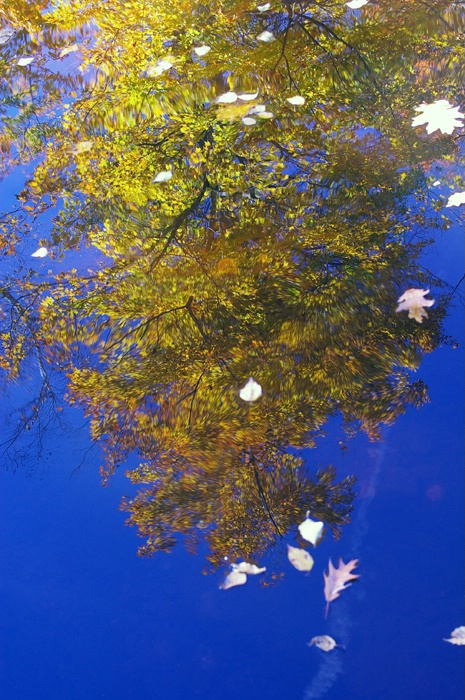 A Reflection Of Autum