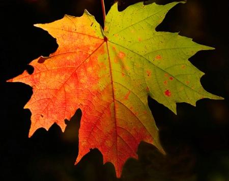 Leaf of Many Colors