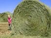 Hay Bale Hide n&#...