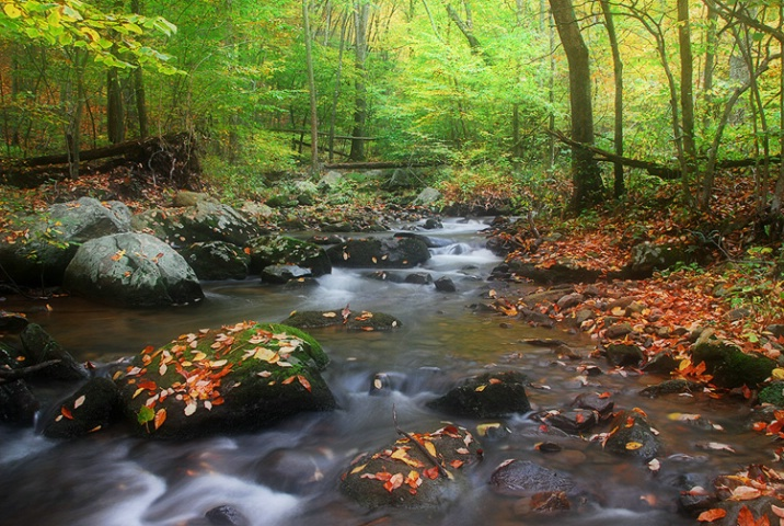 Autumn Stream II