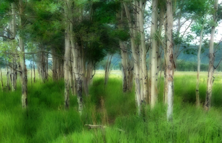 Trees in Tetons - ID: 2836793 © Sherry Karr Adkins