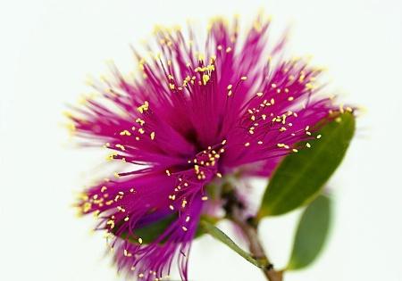 Floral fiber-optics