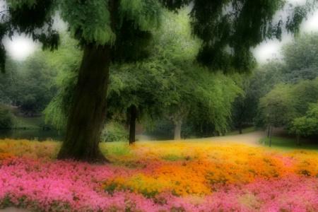 Orton Floral Dream