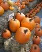 October Bounty