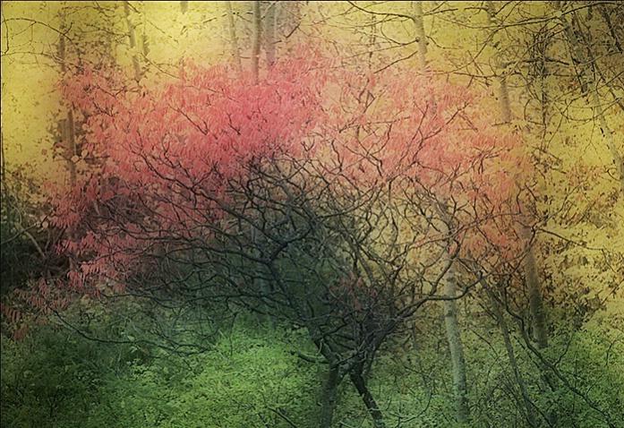 Autumn dream - ID: 2848514 © Brian d. Reed