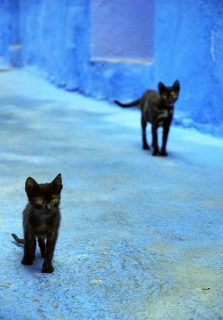 Stray Cats Strut