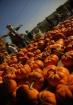The Pumpkin King:...