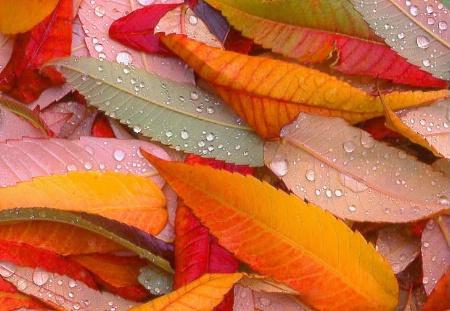 'Fall'en With Grace...