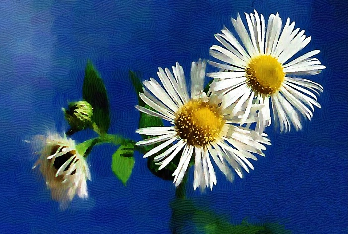 Painting Of A Wildflower