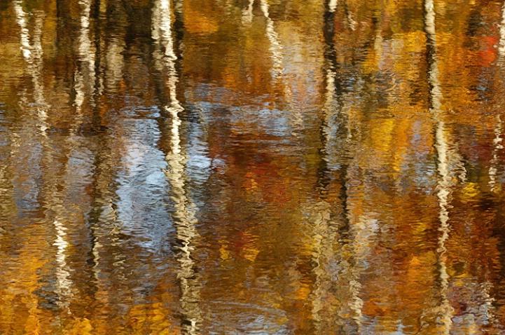 Brushstrokes of Autumn