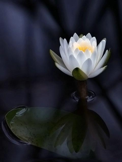 Lily Pond Lovely