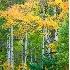 2Changing Colors - ID: 2879976 © Teryl L. Monson