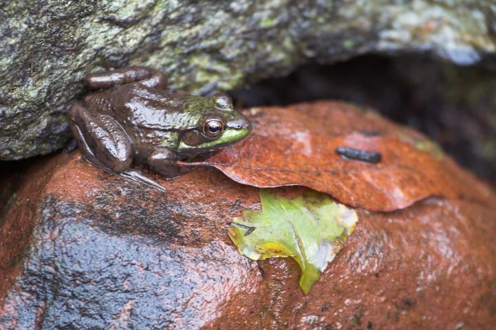 Frog Prince Kinder und Haus Märchen