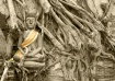 Roots of buddhism