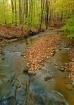 Blue Hen Creek 2
