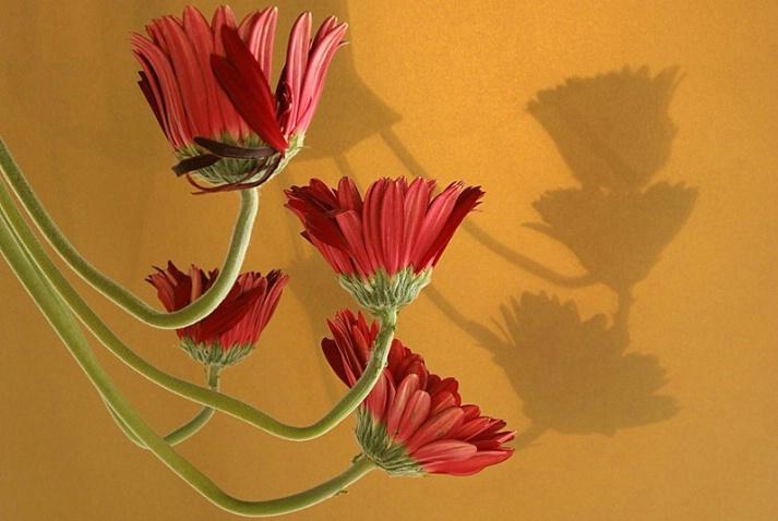 Flower Power  - ID: 2904851 © Agnes Fegan