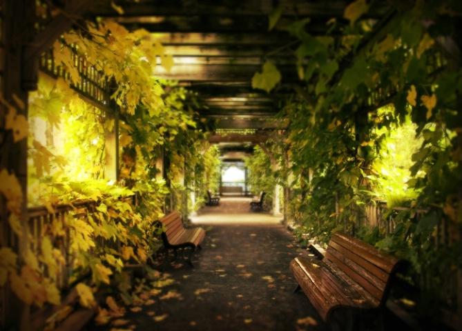 Dream corridor