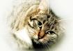 Molly's Cat  ...