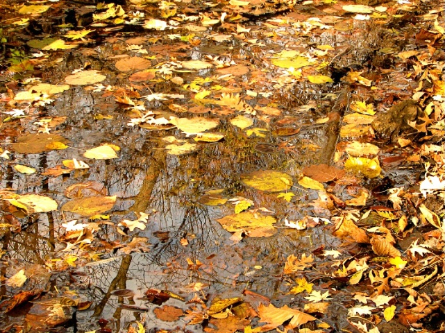 Forest reflections