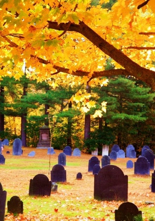 Back Lit Cemetary