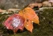 Autumn Departs