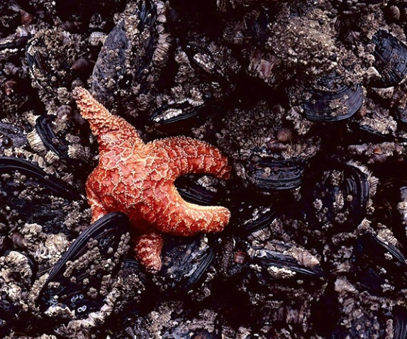 starfish and muscles - ID: 2916380 © Brian d. Reed