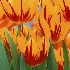 "© Wendy Kaveney PhotoID # 2917345: ""Vibrant Tulips"""