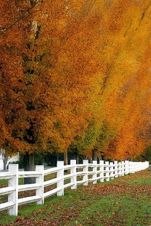 Fenced-in Fall