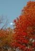 Fall Moonset