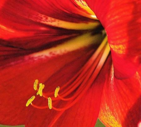 <b>+ Spring Downunder #9 +</b>