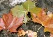 """Autumn Trimv..."