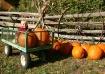Pumpkin Patch Pic...