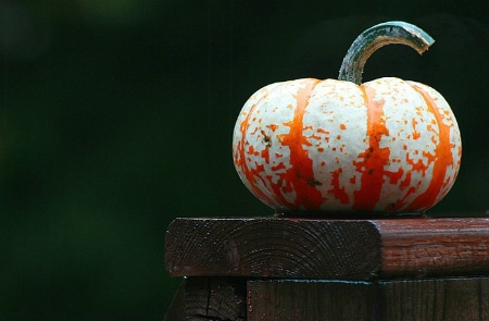 One Little Pumpkin Sitting on a Fence