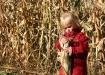 Corn Curious