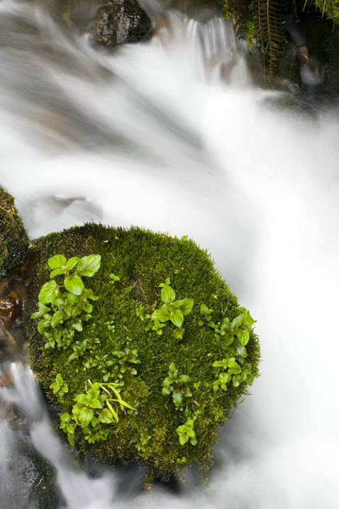 Wahkeena Falls #2 - ID: 2945936 © Tedd Cadd