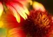 Cascade of Petals