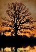 Sunrise oak ( win...