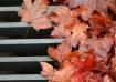 Gutter Leaves