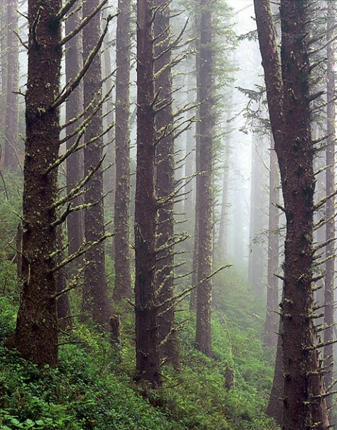 Trees in the mist - ID: 3004380 © Brian d. Reed
