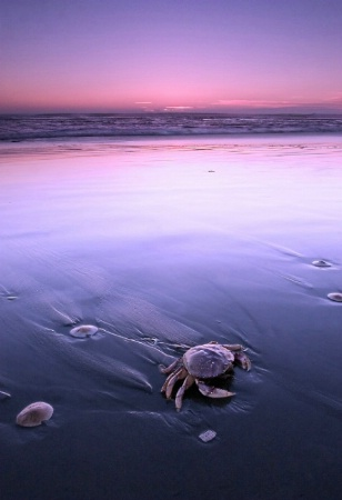Crab at Sunset